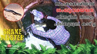 Download Highly venomous Krait caught from the well   Vava Suresh   Snakemaster   Latest episode Video