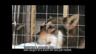 Download DOGS. A documentary about a dog shelter in Russia Video