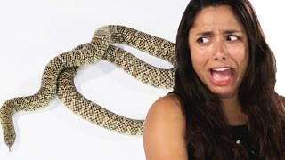 Download People Face Their Fear Of Snakes Video