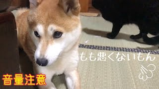 Download ももがママに怒られた理由 This is the reason why my dog was scolded by me Video