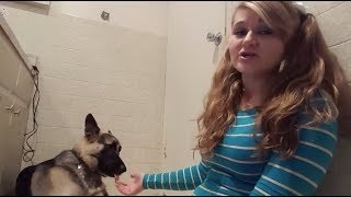 Download MEET THE YOUTUBER THAT HAS S*X WITH HER DOGS Video