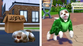 Download STRAY to SIMSTAGRAM STAR | BIRTH TO DEATH - DOG EDITION | A Sims 4 Story Video