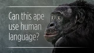 Download What Are Those 'Talking' Apes Really Saying? Video