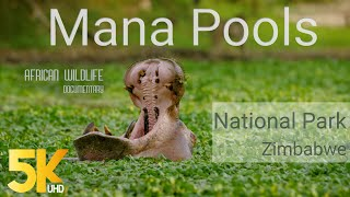 Download 5K African Wildlife Documentary Film - Mana Pools National Park, Zimbabwe, Africa - 1 HR Video