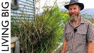Download Simple Permaculture-Based Grey-Water Treatment System Video