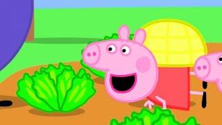 Download Peppa Pig Official Channel | Peppa Pig Loves Vegetables Video