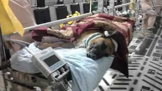 Download MWD and handler tribute Video