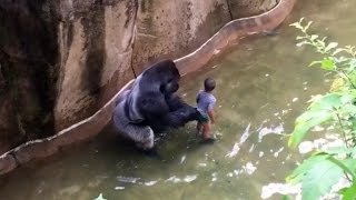 Download Mom of Boy Who Fell Into Gorilla Enclosure: I Watch on My Kids, Accidents Happen Video