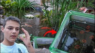 Download My FISH had MORE BABIES!!! Video