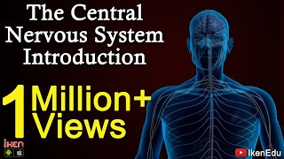 Download The Central Nervous System- Introduction Video