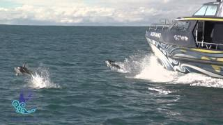 Download Whale Watch Kaikoura 2 Min Video Video