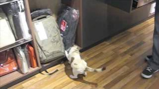 Download Cat Peeing inside Apple Store Video