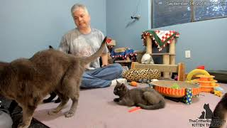 Download Five Guys Kittens - Packing Their Bags (Last Evening, part 1 of 2) Video