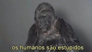 Download ESTE GORILA FALOU E VOCÊ NÃO VAI ACREDITAR NA MENSAGEM DELE Video