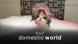 Download Our Domestic World: The Living Room & Bathrooms Video