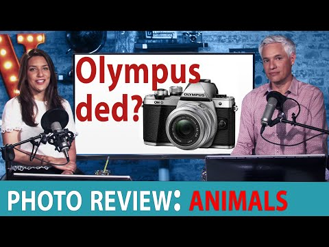 Olympus DYING + Animal Photo Reviews - Chelsea & Tony LIVE!