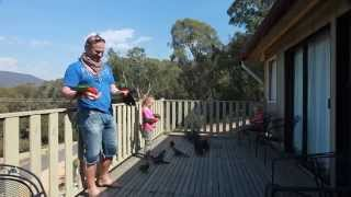 Download Hand Feeding Wild Australian Parrots Video