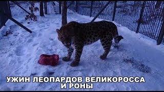 Download УЖИН ЛЕОПАРДОВ ВЕЛИКОРОССА И РОНЫ Video