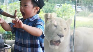 Download Kids play with Lion at the Zoo: Elephant swimming and cute animals Video