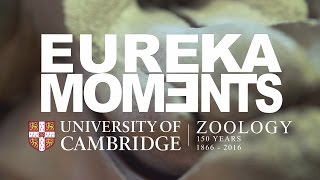 Download Eureka Moments Trailer Video