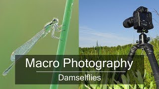 Download Wildlife Photography in the Field: How to Photograph Insects Video