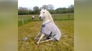 Download When HORSE & DOG TRAINING goes WRONG - LAUGH HARD at FUNNY VIDEOS Video