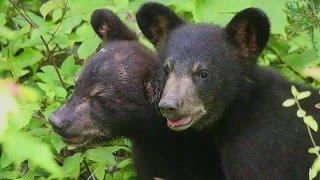 Download Welcome to Appalachian Bear Rescue! Video