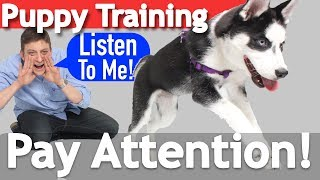 Download How to Teach your Puppy to Listen When they Won't! Video