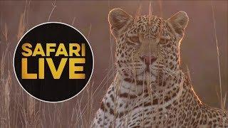 Download safariLIVE - Sunset Safari - August 16, 2018 Video