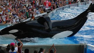 Download 5 Things SEAWORLD Is Hiding From You! Video