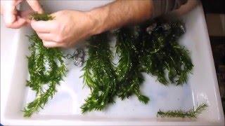 Download Aquatic Plants Anchors Video