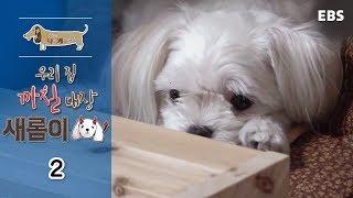 Download 세상에 나쁜 개는 없다 - 우리집 까칠대장 새롬이 #002 Video