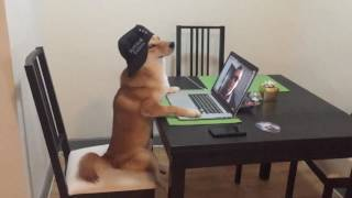 Download .. Dog Mannequin Challenge #ManiquinnChallenge with shiba inu Chiko (part 1) Video