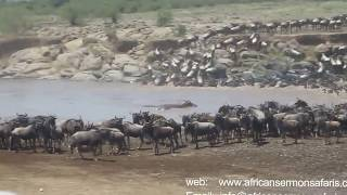Download Kenya safari - Watch wildebeest Migration in Masai Mara named the 7th Wonder of the World Video