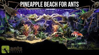 Download I Created a Pineapple Beach Vivarium for Ants | Super Relaxing Video Video
