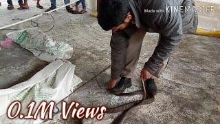 Download पोल्ट्रीत आला होता पिल्ली खाण्यासाठी साप आणि काय झालं ते पहा Video