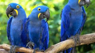 Download Macaw Parrot - Pictures Video