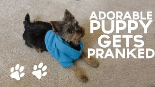 Download Adorable Puppy Gets PRANKED!! Video