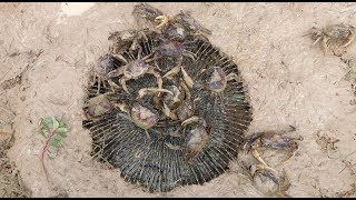 Download Amazing Fan Guard Crab Trap To Catch A Lot Of Crabs By Smart Boys Video