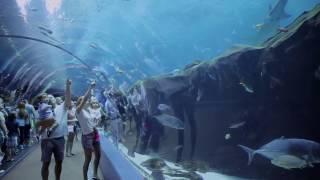 Download New Exhibits at the Georgia Aquarium - Sea Lions, Dolphin Celebration Video