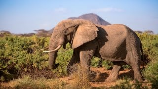 Download Protecting Africa's elephants: Discover Samburu with Save the Elephants & Google Maps Video