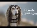 Download سگ های ایران بهترین سگ های دنیا Video