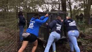 Download The Rescue of Maya Cougar by Big Cat Rescue Video