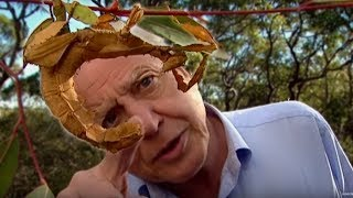 Download Life of Insects | Attenborough: Life in the Undergrowth | BBC Earth Video