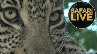 Download safariLIVE - Sunset Safari - July 20, 2018 Video