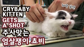 Download 주사 맞는 아기고양이 쵸비 엄살왕 CRYBABY KITTEN GETS A SHOT Video