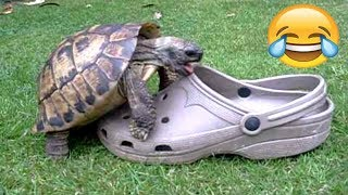 Download FUNNIEST TURTLES - Cute And Funny Turtle / Tortoise Videos Compilation [BEST OF 🐢] Video