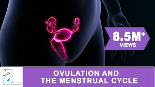 Download OVULATION & THE MENSTRUAL CYCLE Video