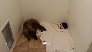 Download The Rescue of a homeless dog and her newborn babies Video