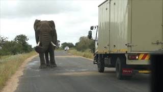 Download African elephant attacks car and run Video